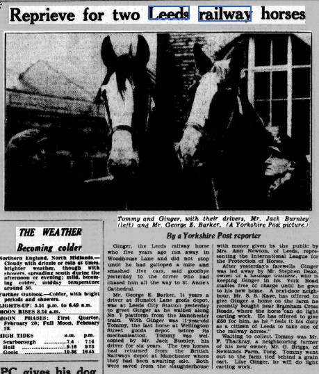 Yorkshire post.18.2.1953 last railway horse saved.jpg